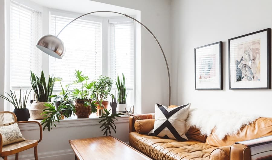 Use Plants for Decoration in Room